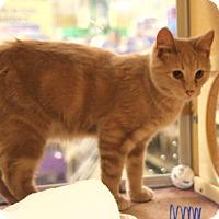Domestic Shorthair Cat for adoption in Rochester, Minnesota - Washington