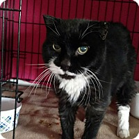 Adopt A Pet :: Tux - Acushnet, MA