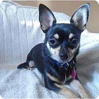 Adopt A Pet :: Kiki - Rigaud, QC