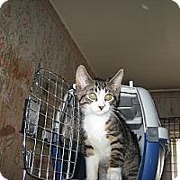 Adopt A Pet :: Sneaker - london, ON