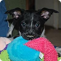 Adopt A Pet :: Ethan - Homewood, AL