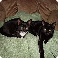 Adopt A Pet :: Tessa - Harrisburg, NC