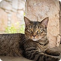 Adopt A Pet :: Lila - San Antonio, TX