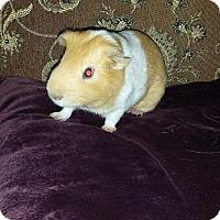 Adopt A Pet :: Peter Murphy - Fullerton, CA