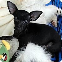 Adopt A Pet :: Ittzy - Tumwater, WA