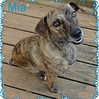 Adopt A Pet :: Mia - Ozark, AL