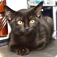 Adopt A Pet :: Rosebud - Davis, CA