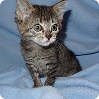 Adopt A Pet :: Bobo - Bentonville, AR
