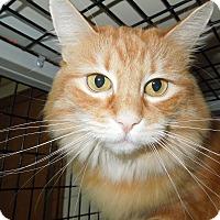 Adopt A Pet :: Persis - Medina, OH