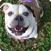 Adopt A Pet :: Brooklyn - Santa Ana, CA