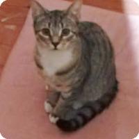 Adopt A Pet :: Possum - Franklin, NH