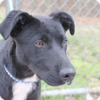 Adopt A Pet :: Ace - Rochester, NY
