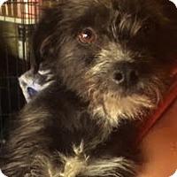 Adopt A Pet :: Pepper - Thousand Oaks, CA