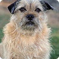 Adopt A Pet :: Jess - SAN PEDRO, CA
