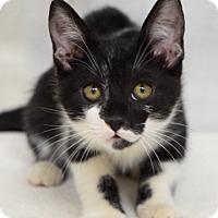 Adopt A Pet :: Christopher - Dublin, CA