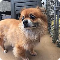 Adopt A Pet :: Toby - San Francisco, CA