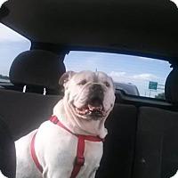 Adopt A Pet :: YOSHA-courtesy - Morgantown, IN