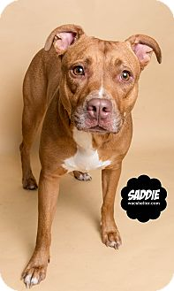 Terrier (Unknown Type, Medium) Mix Dog for adoption in Wyandotte, Michigan - Sadie
