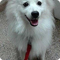 Adopt A Pet :: Shamus of Southern Ohio - Lindsey, OH