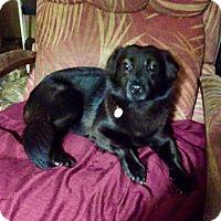 Adopt A Pet :: Clair - Washington, PA