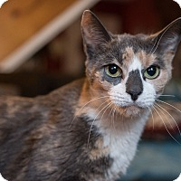 Adopt A Pet :: Laine - Staten Island, NY