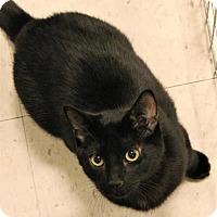 Adopt A Pet :: Jake - Encinitas, CA