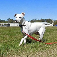 Adopt A Pet :: Buddy - St. Francisville, LA
