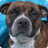 Adopt A Pet :: Madie - Cuba, NY