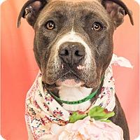 Adopt A Pet :: Marcy - Phoenix, AZ