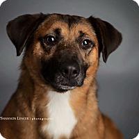 Adopt A Pet :: Zee Bee - Nyack, NY