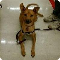 Adopt A Pet :: Frannie - Rocky Mount, NC