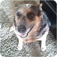 Adopt A Pet :: Quentin - Phoenix, AZ