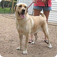Adopt A Pet :: Bella - Spring, TX