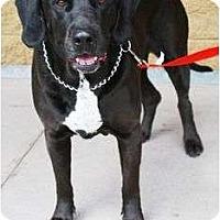 Adopt A Pet :: Sirius - Gilbert, AZ