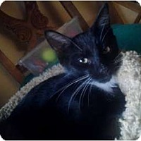 Adopt A Pet :: Whiskers - Lantana, FL