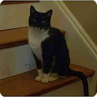 Adopt A Pet :: Bonnie & Clyde - Quincy, MA