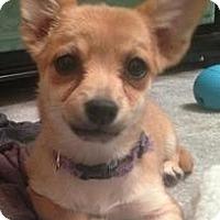 Adopt A Pet :: Fiona - Hilliard, OH