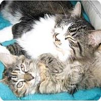 Adopt A Pet :: Sebastian - Portland, ME