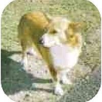 Adopt A Pet :: Sassy - Inola, OK