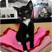 Adopt A Pet :: Maura - Farmingdale, NY