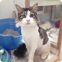 Adopt A Pet :: Montezuma - Davis, CA
