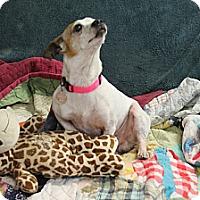 Adopt A Pet :: Barney - Marietta, GA
