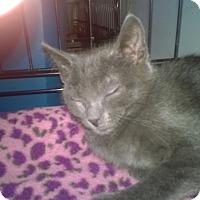 Adopt A Pet :: Kaleb - Speonk, NY