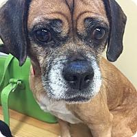 Adopt A Pet :: Joy - Nashville, TN