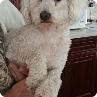 Adopt A Pet :: Zeke - Phoenix, AZ