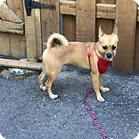 Adopt A Pet :: Timy aka Tim - Pierrefonds, QC