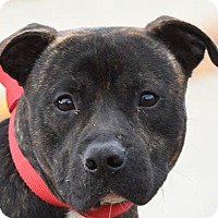Adopt A Pet :: DEUCE - New Haven, CT