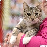 Adopt A Pet :: Cody - Westchester, CA