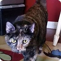 Domestic Shorthair Cat for adoption in Colbert, Georgia - Anastasia