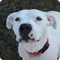 Adopt A Pet :: Gucci - Pompton lakes, NJ